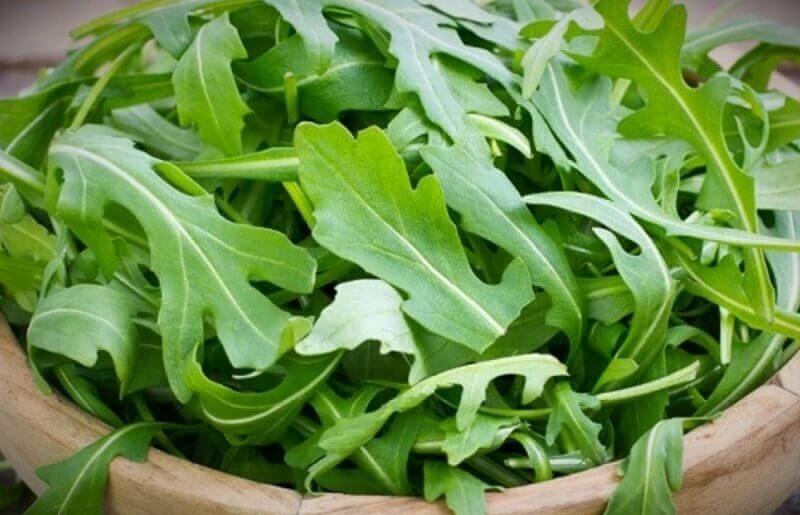виды листовых салатов фото с названиями
