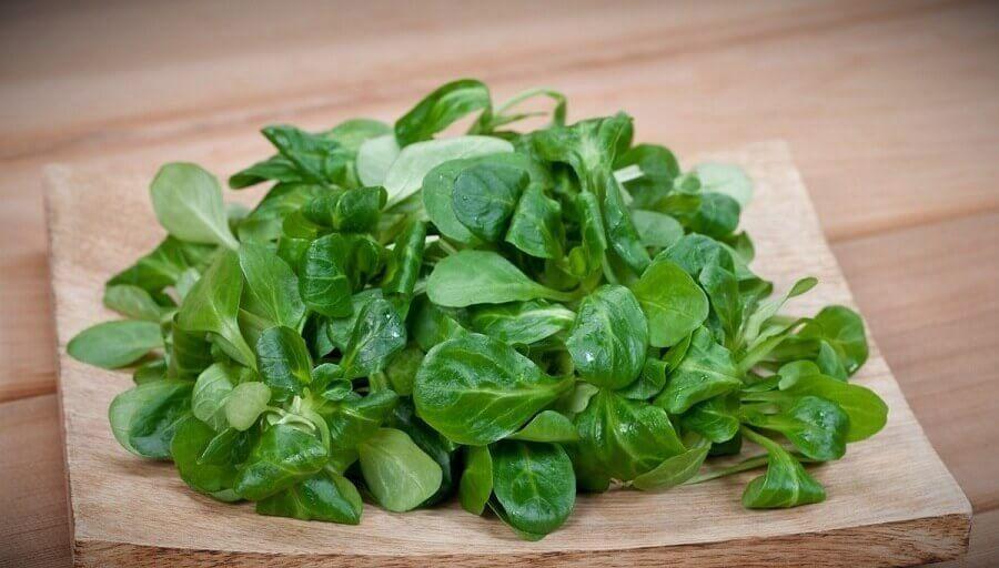 10 populyarnyh vidov listovyh salatov8