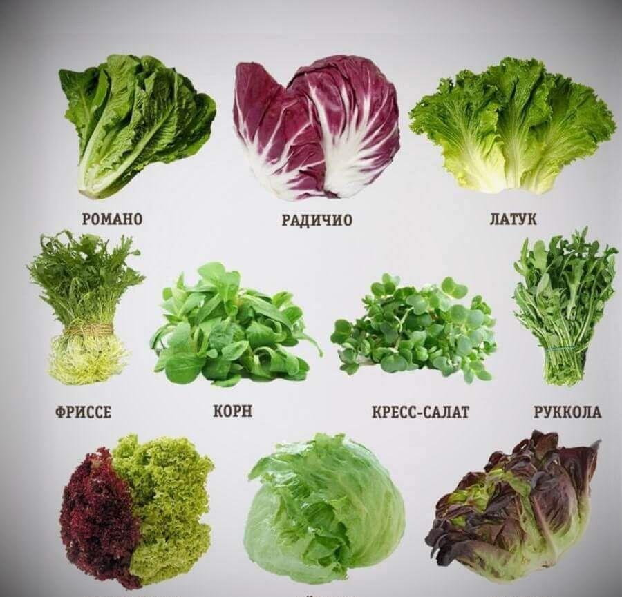 таблица листовых салатов с названиями и фото