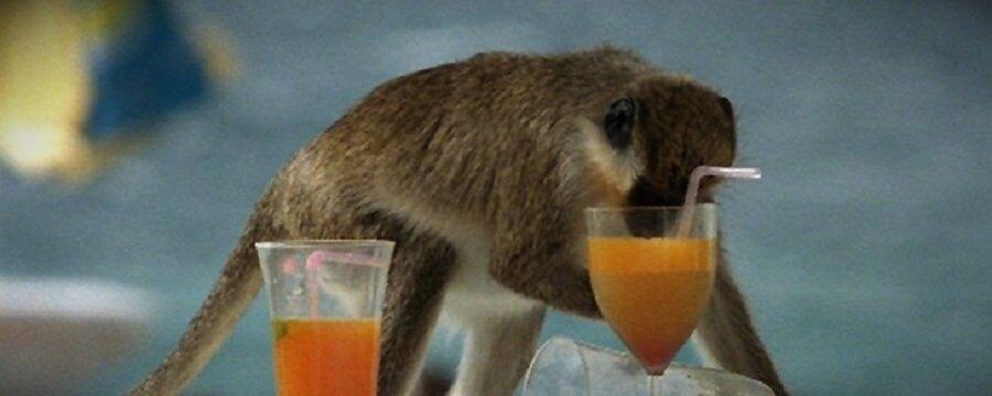 животные алкоголики в дикой природе
